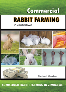 Commercial Rabbit Farming in Zimbabwe